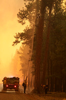 Member of a Type 6 Engine crew puts out a spot fire in a large Ponderosa Pine Tree